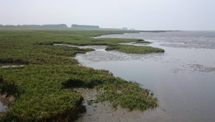 Sustainable coastal protection through a combination of salt marshes and dykes