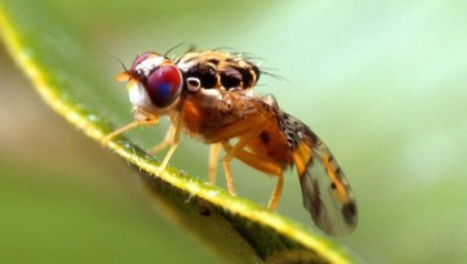 Improved fruit fly dashboard  thanks to Tailor-made-training by ITC